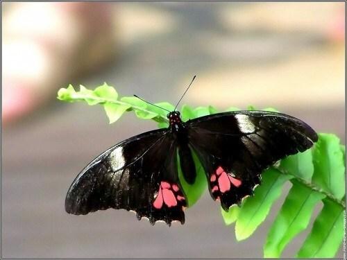 jardin papillon23.jpg