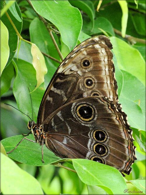 Photos de papillons tropicaux (Ile aux papillons-Noirmoutier)