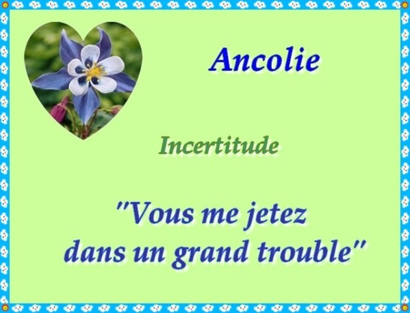 Ancolie