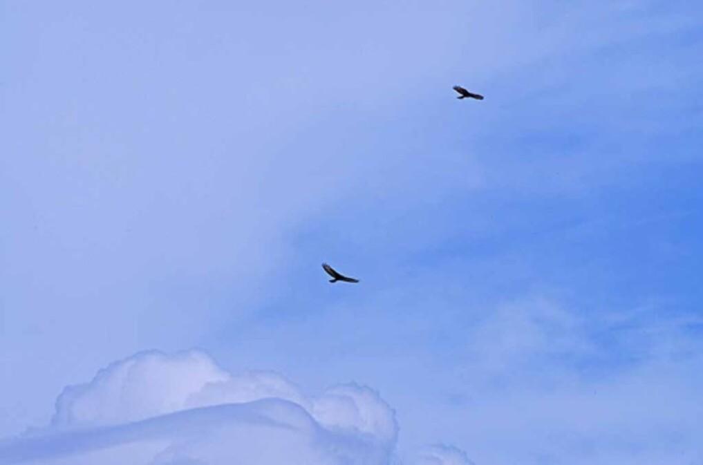 Oiseaux 0835a-3