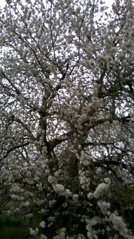 Vive le printemps :-)