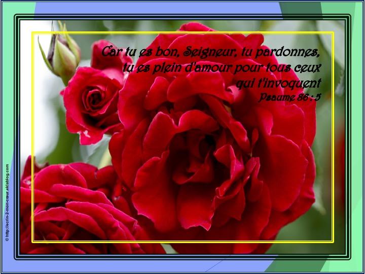 Car tu es bon, Seigneur, tu pardonnes - Psaumes 86 : 5