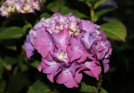 Jardin en fleurs ! (2)