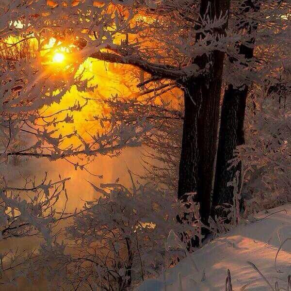 Soleil dans la neige