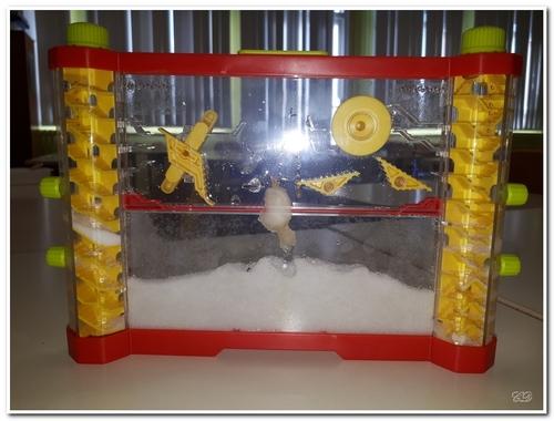 Observation de fourmis