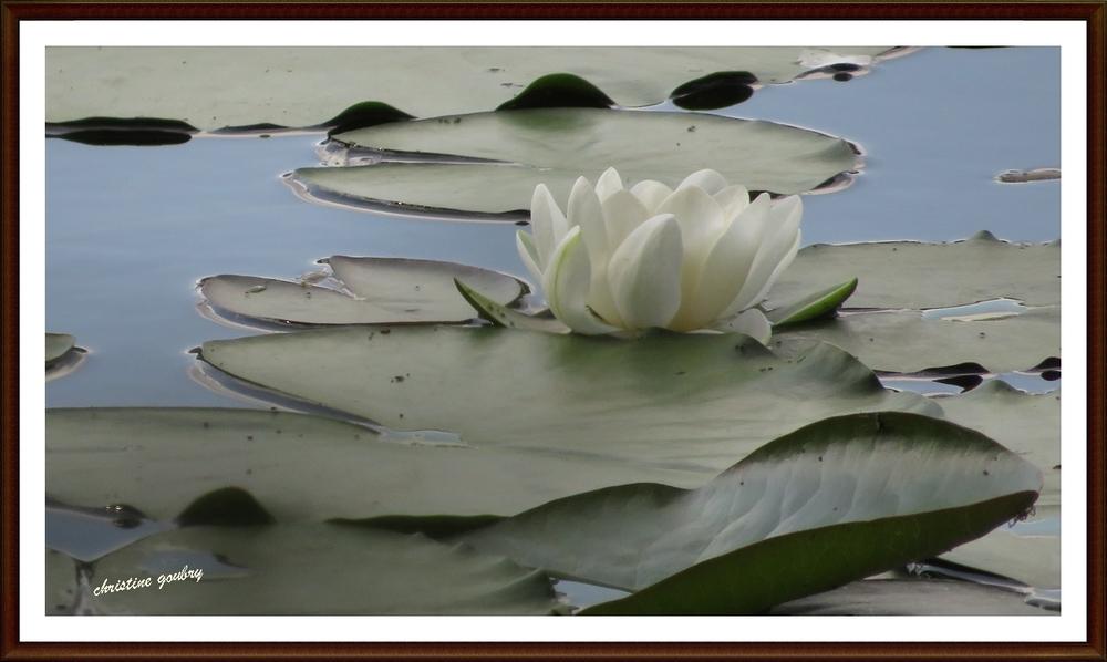 A fleur d'eau...