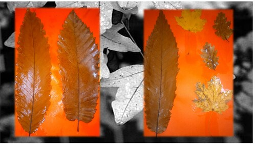 Arts plastiques : feuilles d'automne