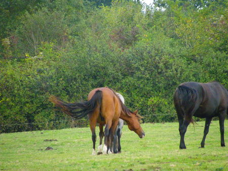 chevaux_valogne_2009__2_