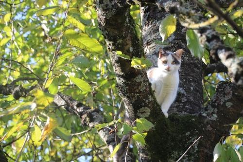 Un chat dans le cerisier