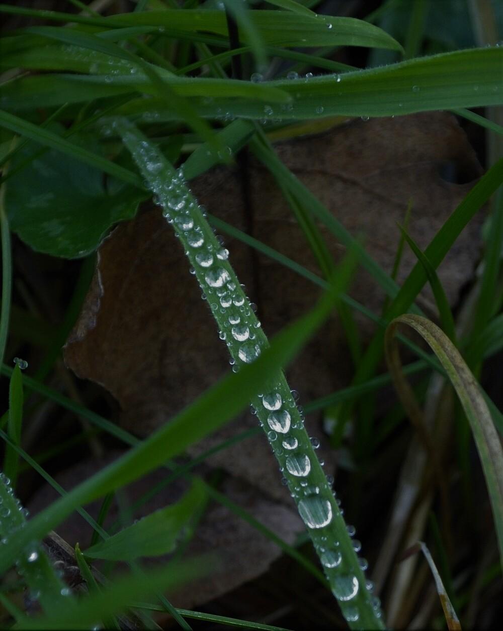 Quelques perles de pluie
