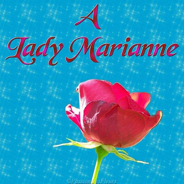 001rose-lady marianne