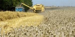 Pour les agriculteurs, ressemer sa propre récolte sera interdit ou taxé