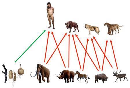 Une comparaison entre les différentes proies dont se nourrissaient les prédateurs contemporains des néandertaliens il y a 40.000 ans environ. © Bocherens
