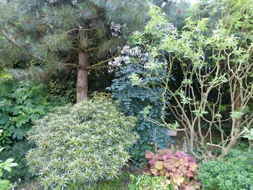 Le gris au jardin