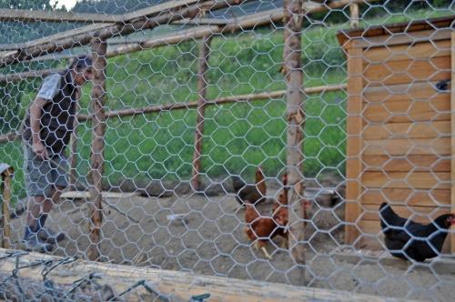 Le dompteur de poules...