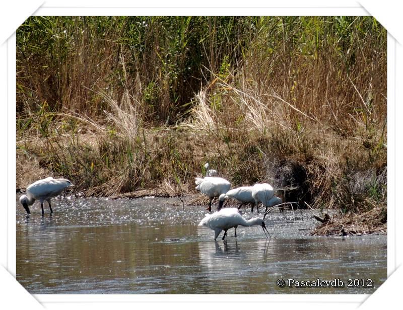 Visite aux oiseaux du Teich - 3/12