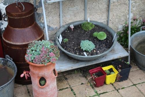 Nouvelle lubie avec les succulentes