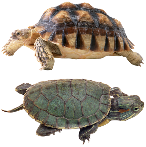 Tubes Tortues