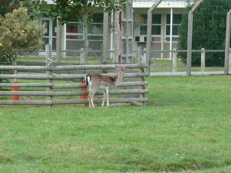 petit bambi en peu timide
