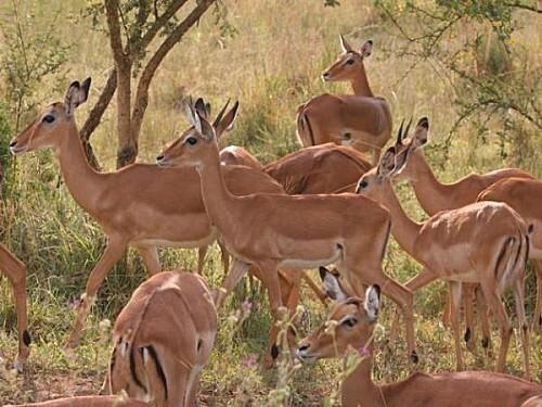 safaridouze-thumb-940x705-1705-600x450