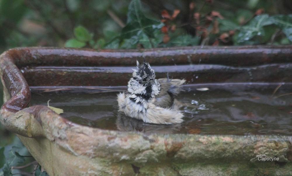 Effervescence aux bains-douches
