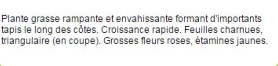 """** Les """"AMERIAS Mmes"""" et LIS de MER & Autres Fleurs du Litoral.*BRETON**"""