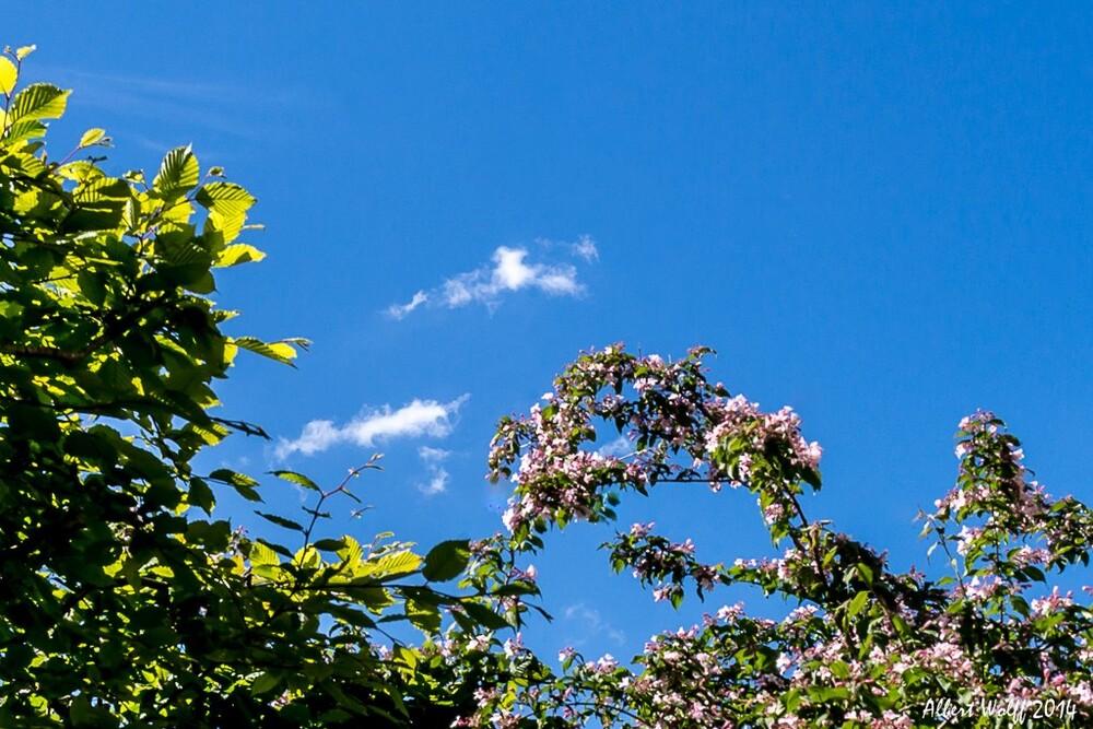 Sur la route des fleurs - Cressia - 2 - 39