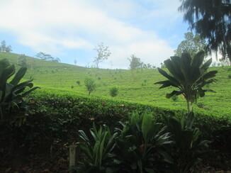 Kandy et sa région du 21 au 23 février 2015