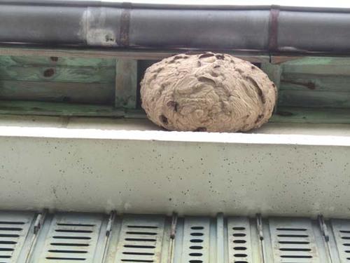 Les nids secondaires
