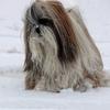 Chang dans la neige 032.jpg