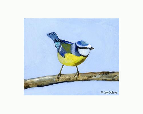Merveilleuse mésange bleue