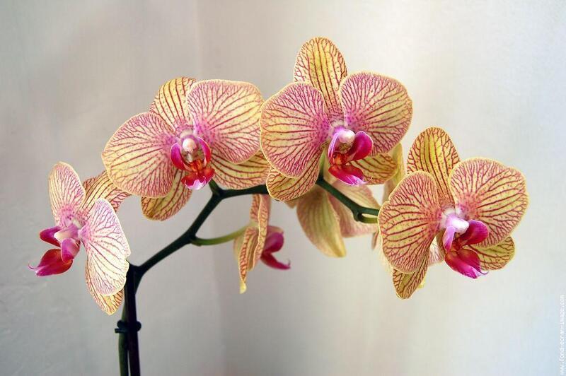 Flore Réunion