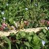Fleurs 4.jpg