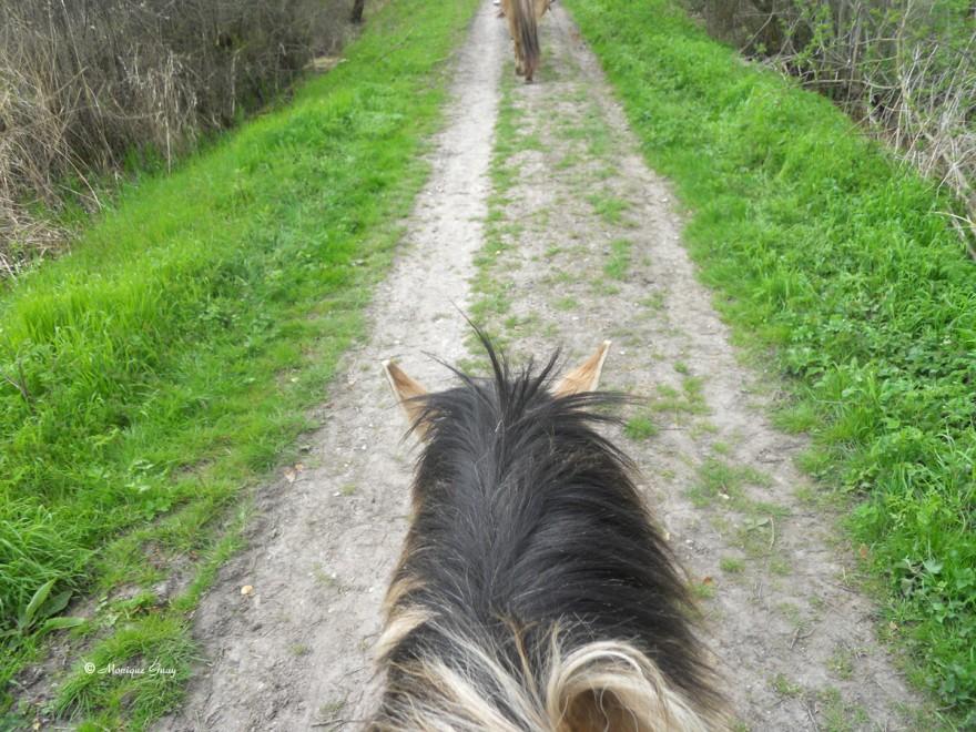 tete-cheval-0347.jpg
