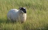 Mouton - p 373