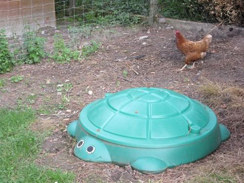 Les poules s'amusent !
