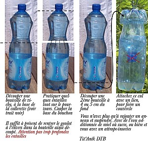Bouteille-attrape-insectes3.jpg