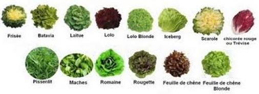 Salades . A chacune ses bienfaits