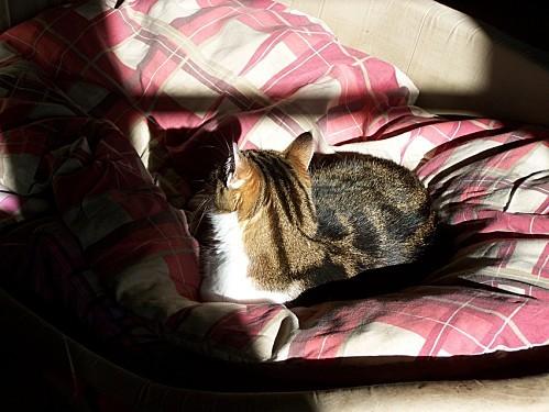 Mousse baignoire au soleil oct 2012 2