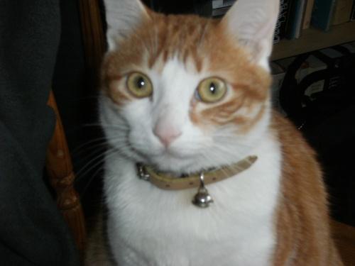 ♥Images de mon chat Myrdine ♥