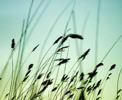 """Résultat de recherche d'images pour """"brin d'herbe"""""""
