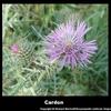 visuel-cardon-e7b.jpg