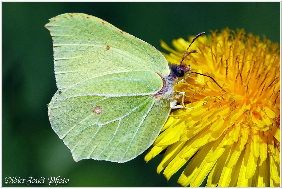 Quelques Papillons...