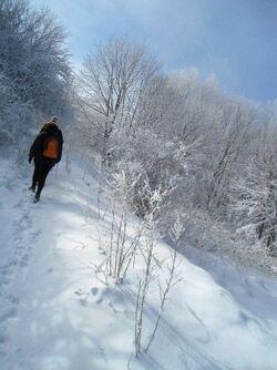 Neige tardive à Kopitoto