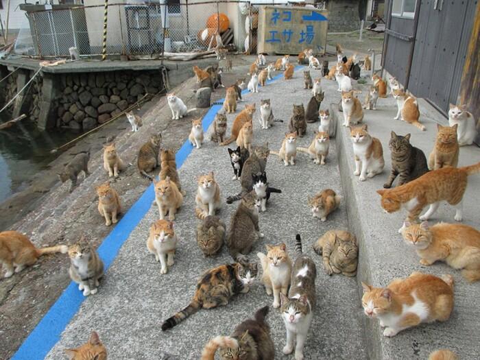 En pénurie de nourriture, l'île aux chats au Japon demande de l'aide à Internet