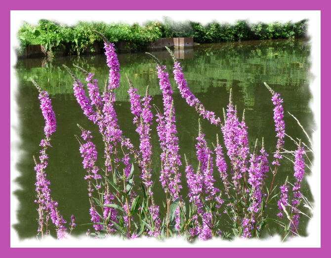 Des bords de nos ruisseaux ...