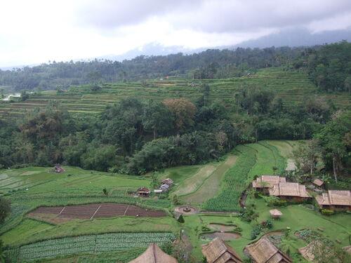 Souvenirs de Bali (suite)
