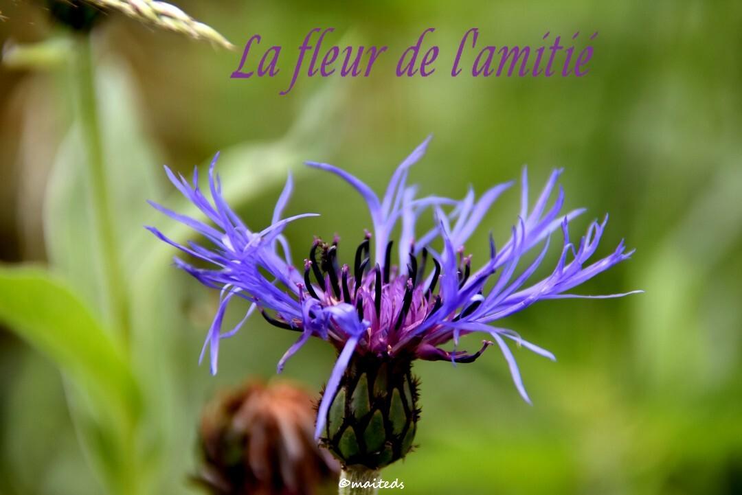 ©maiteds la fleur de l'amitié