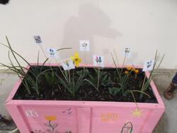 Plantations CE1b