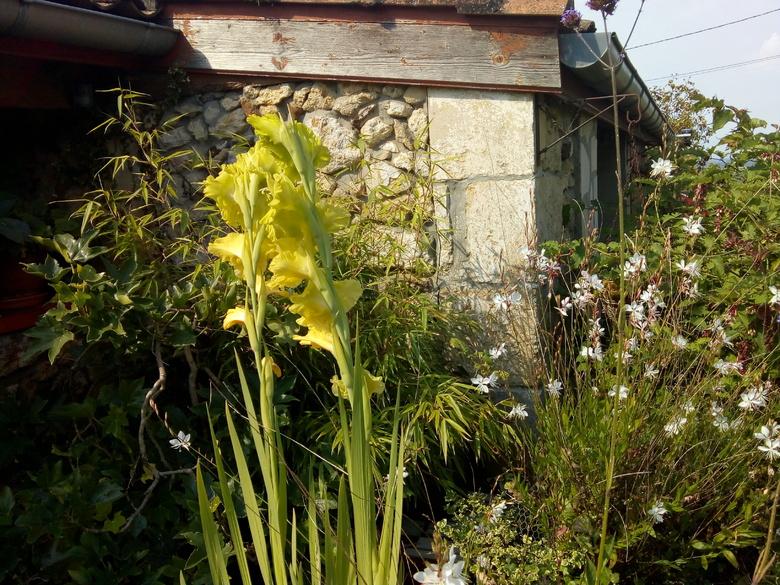 promenade dans mon jardin(allée 2 )